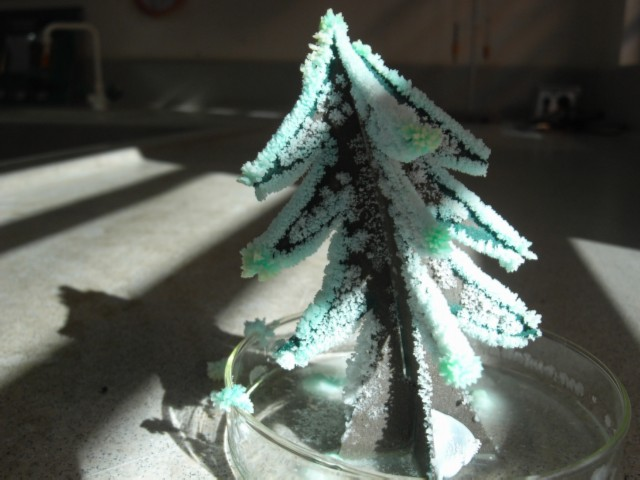 Fir tree model in sunlight