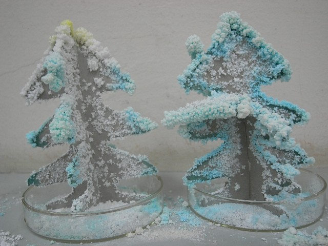 Fir trees covered in snow
